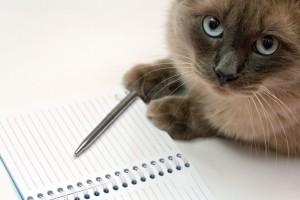 gatto scrittore