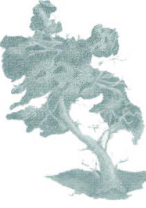 23. albero